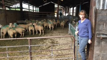 Are you using the right selenium-approved sheep bolus?