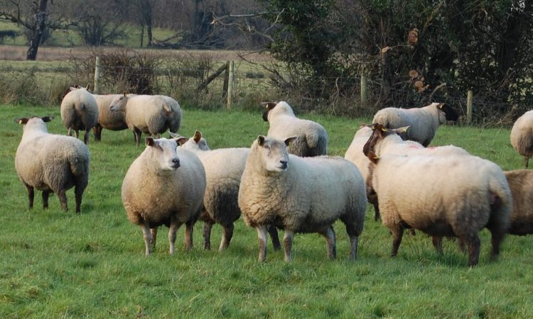 Agriculture Bill rejection leaves a 'real risk' to UK animal welfare standards – NSA