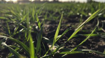 Project to investigate Scottish 'carbon farming' opportunities