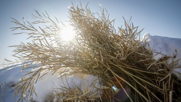 Grain price: Little movement in price or some harvest reports