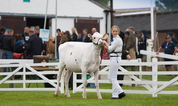 Finalists announced for 2019 Holstein UK President's Medal