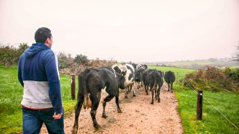 Just 55 farms receive support from Government's Dairy Response Fund