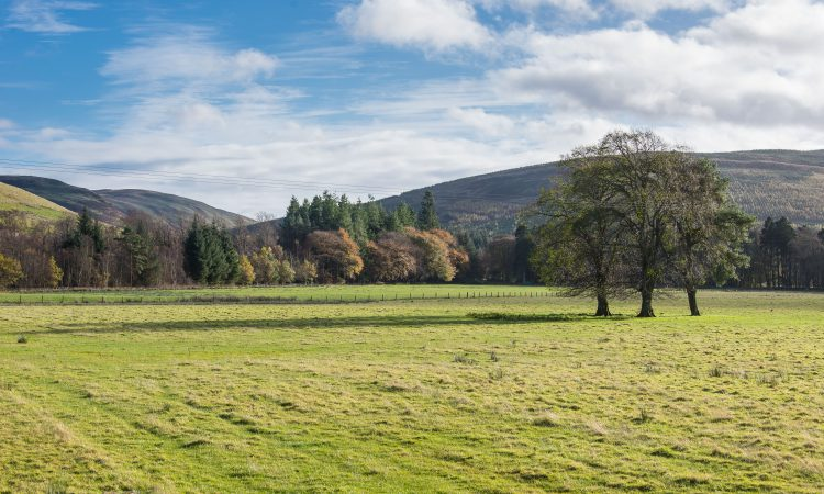 Forestry England launches woodland creation scheme for landowners