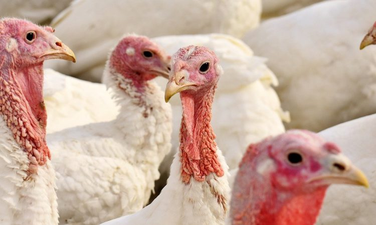 Alliance hit back as local authority plans to ban meat ahead of Christmas 2020