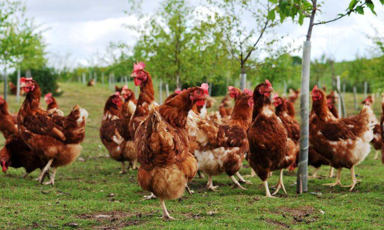 NI authorities investigating suspected bird flu case
