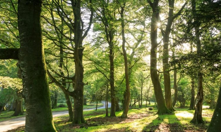 UK government launches new Environment Bill outlining 5 key principles