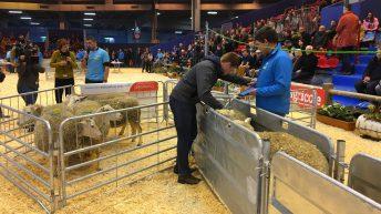 UK young shepherds head to European finals
