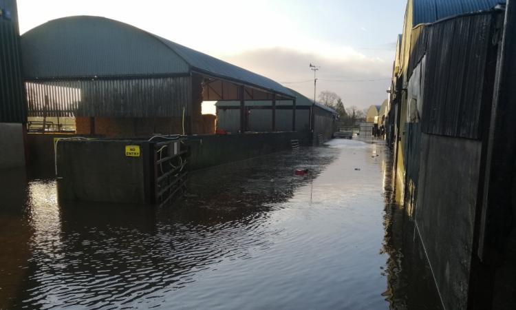 Farmers forced to evacuate 700 ewes following farm yard flooding