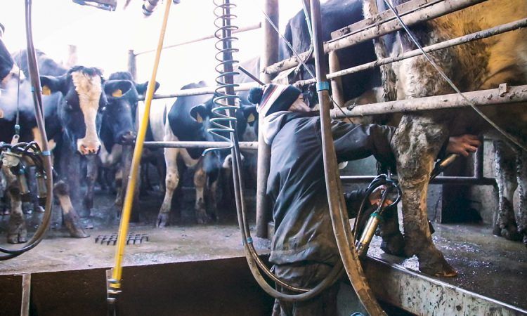 Refreshed strategy for the Scottish Dairy sector launched