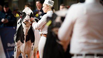 UK Dairy Expo goes ahead despite Covid-19 concerns