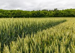 Scottish growing sector faces pros and cons due to mixed weather