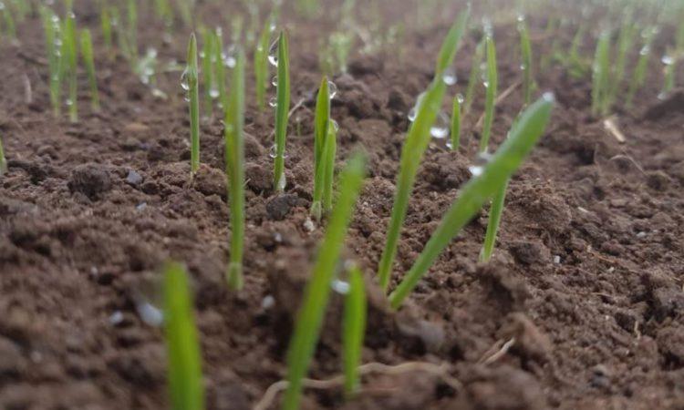 Grain price: Driest start to spring in western Europe