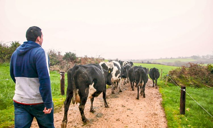 Abbott and Batters debate Brexit and future of UK agriculture in OFC webinar