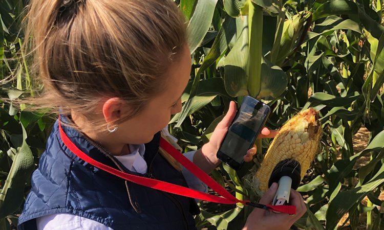 Pocket-sized moisture metre in the corn fields of the US