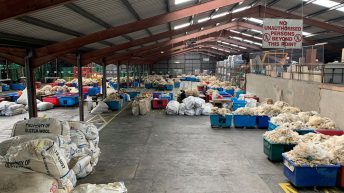 UK wool price to average 32p/kg for 2019-2020 clip