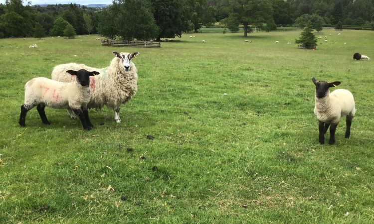 'All the elements for a wonderful rural lifestyle': 84ac farm for sale in Scotland