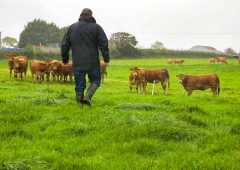 The next few years will be a 'defining period for farming' – NFU Cymru