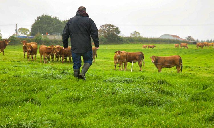 The next few years will be a 'defining period for farming' – NFU Cymru