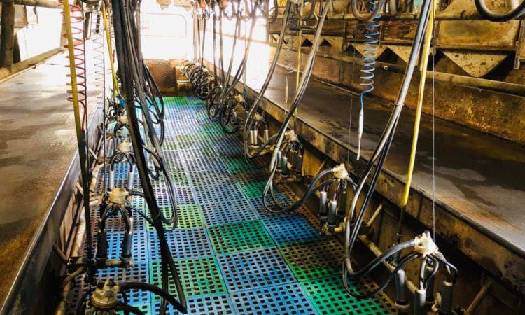 GDT index surge 'must signal lift in milk price'