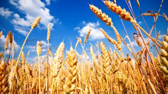 Government to end 3-crop rule in England from 2021