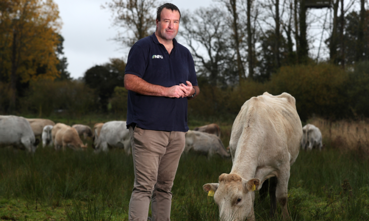 'Badger culling delivers reductions in bovine TB of up to 66%' – NFU