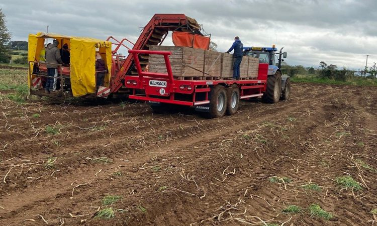'Attention to detail is important' as potato harvest gets into full swing