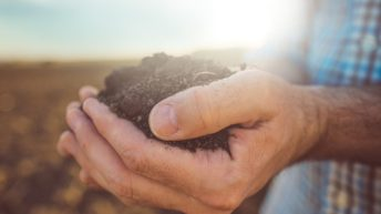 Learning to maximise soil health at Cereals