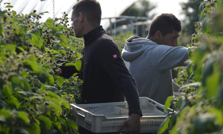 Seasonal Worker Scheme to be introduced in 2021