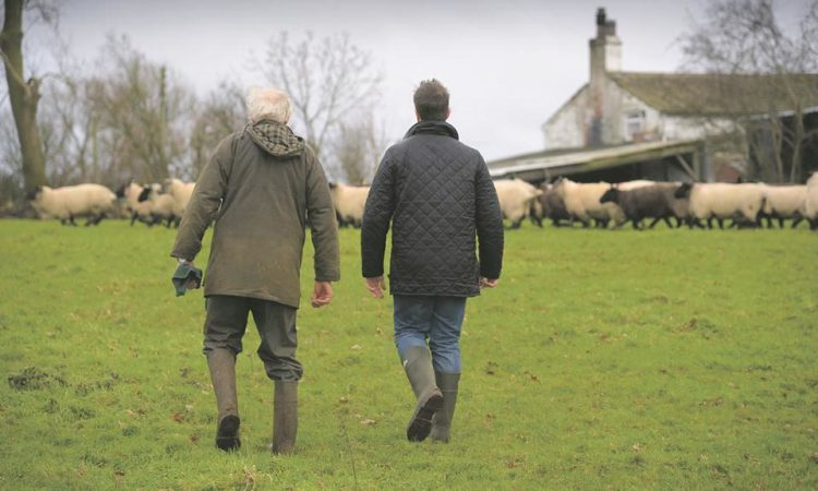Payments for NI's £18 million Covid-19 farm support fund to begin today
