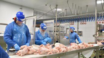 Avara Foods partners with Kickstart scheme