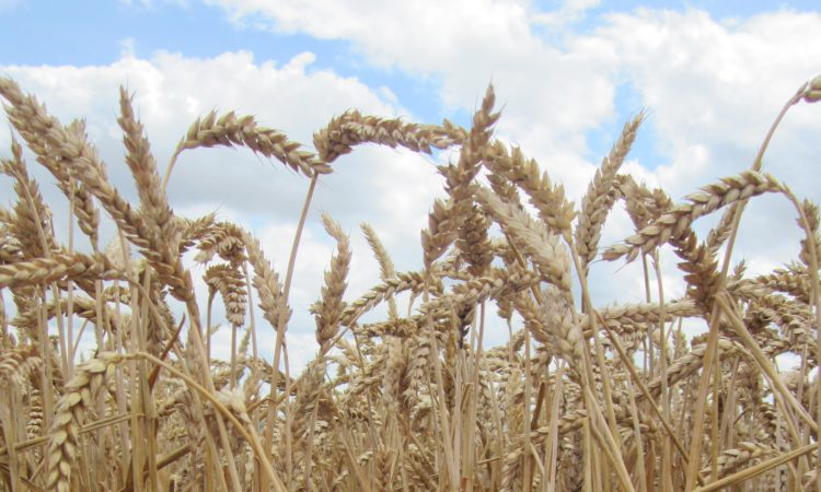 Which countries are most likely to impact on your grain prices?