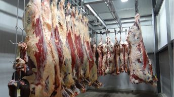 MLCSL and Kepak agree deal to boost independent carcase classification