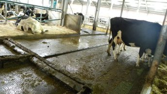 Poots to call for bigger budget for NI's Farm Business Investment Scheme