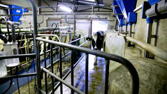 NFU launches new dairy strategy at UK Dairy Day