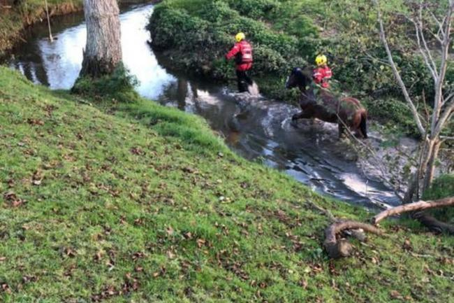 Firefighters called to rescue horse stuck in a river