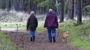 NSA calls for dog walkers to respect the countryside after recent attacks on sheep