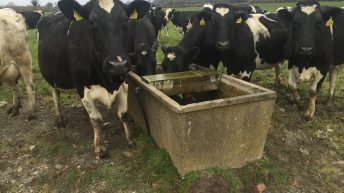 Water regulations will 'kill off' Welsh family dairy farms – FUW