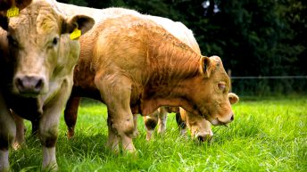 'Huge mistake' for government to 'water down' gene editing legislation – RSPCA