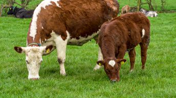 SSBSS payments underway for Scottish farmers