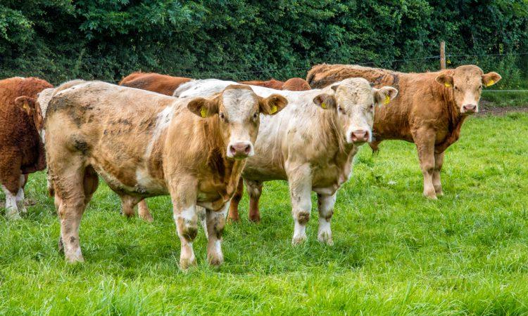 How badly does a bovine TB breakdown affect a farmer's mental health?