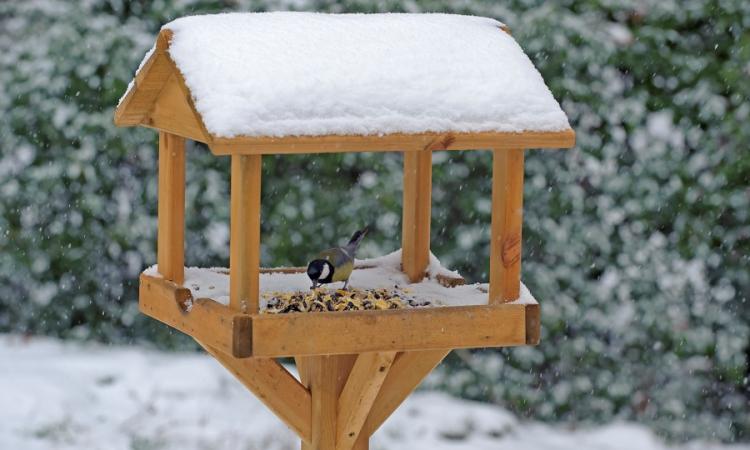 A Christmas feast for your garden birds