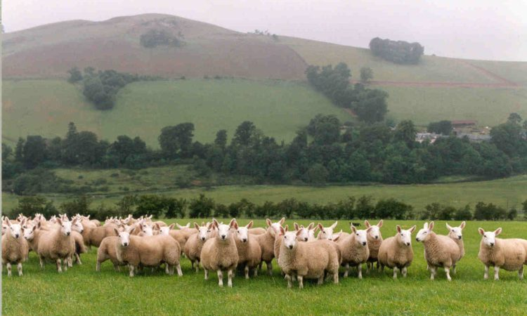 £2.3 million worth of farm animals stolen from UK farms in 2020