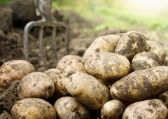 Growers raise concerns about comments supporting a compulsory levy