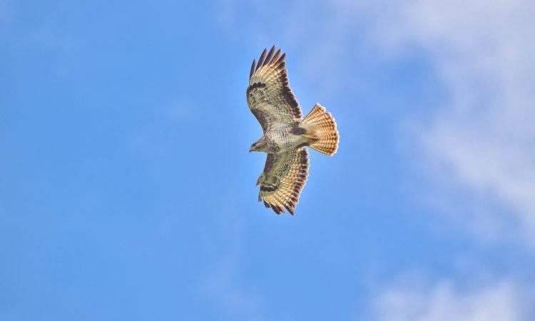 NFU Cymru welcomes High Court ruling on general licences for bird control