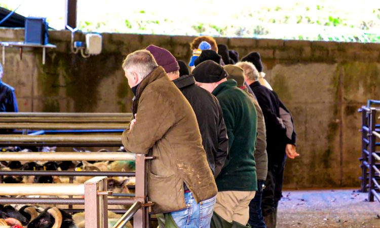 Farm businesses can play a 'key role' in investment-led recovery – NFU