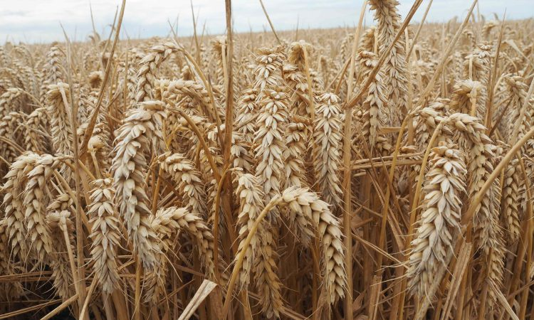 Brexit is impacting on grain imports into Northern Ireland