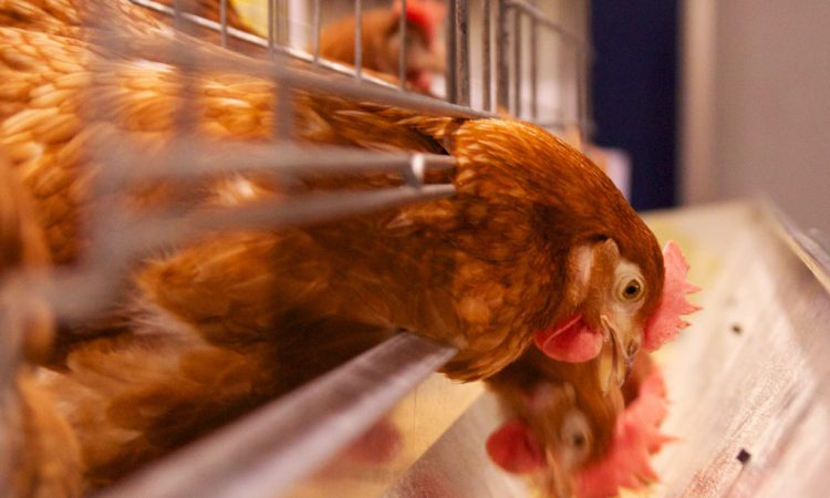Producers advised to take back some control of poultry feed costs