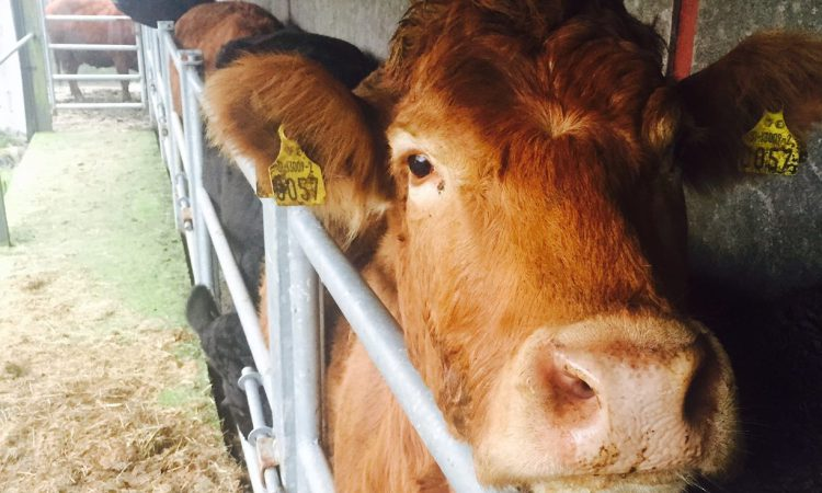 NI bovine TB plan expected to be published in March