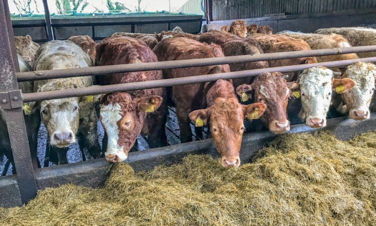 Making a start on scanning autumn-calvers