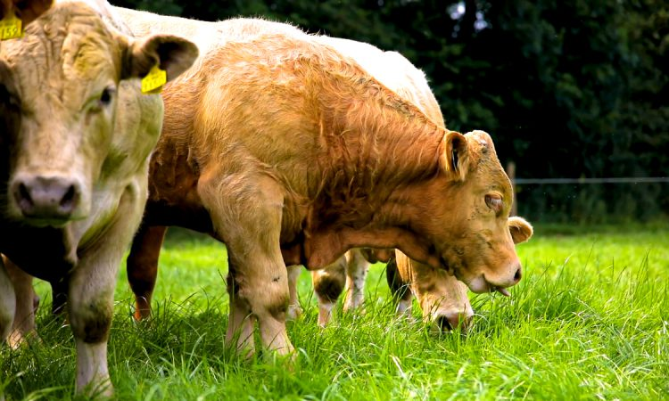 Farmers urged to treat livestock for flies to prevent rapid population explosion